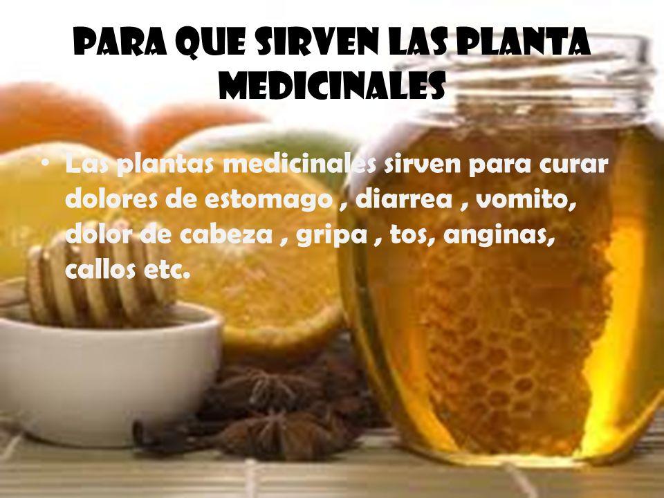 Para que sirven las planta medicinales Las plantas medicinales sirven para curar dolores de estomago, diarrea, vomito, dolor de cabeza, gripa, tos, an