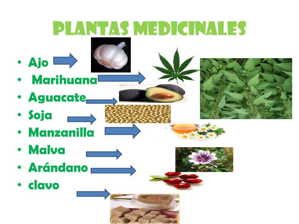 Plantas medicinales Ajo Marihuana Aguacate Soja Manzanilla Malva Arándano clavo