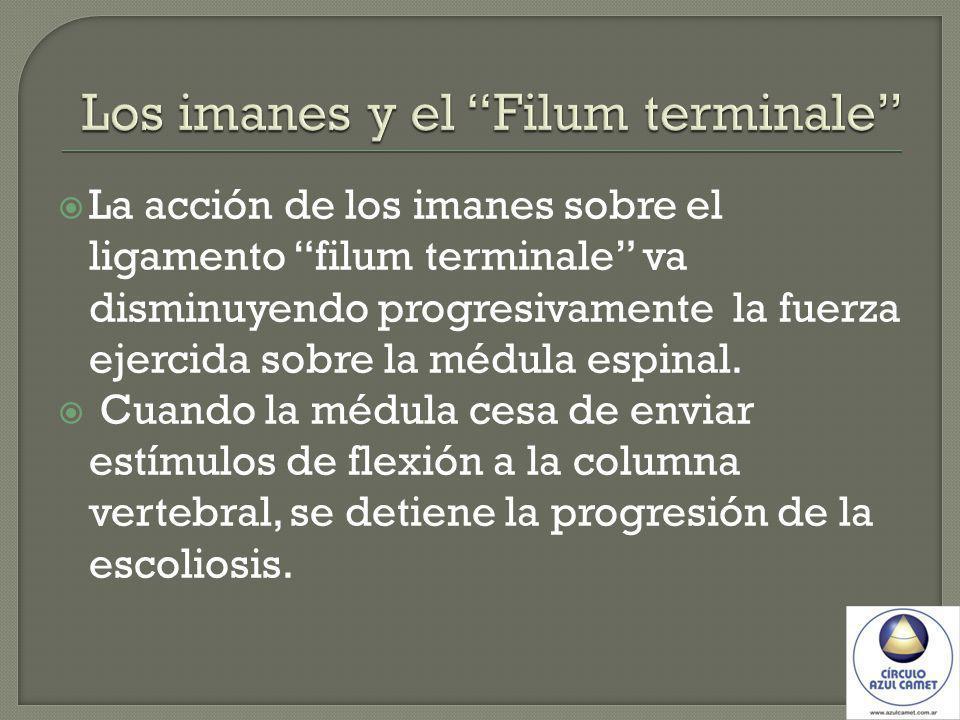 La acción de los imanes sobre el ligamento filum terminale va disminuyendo progresivamente la fuerza ejercida sobre la médula espinal.