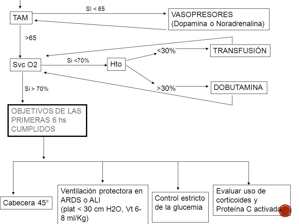 TAM VASOPRESORES (Dopamina o Noradrenalina) SI < 65 Svc O2 Hto TRANSFUSIÓN DOBUTAMINA <30% >30% OBJETIVOS DE LAS PRIMERAS 6 hs CUMPLIDOS Si <70% Si >