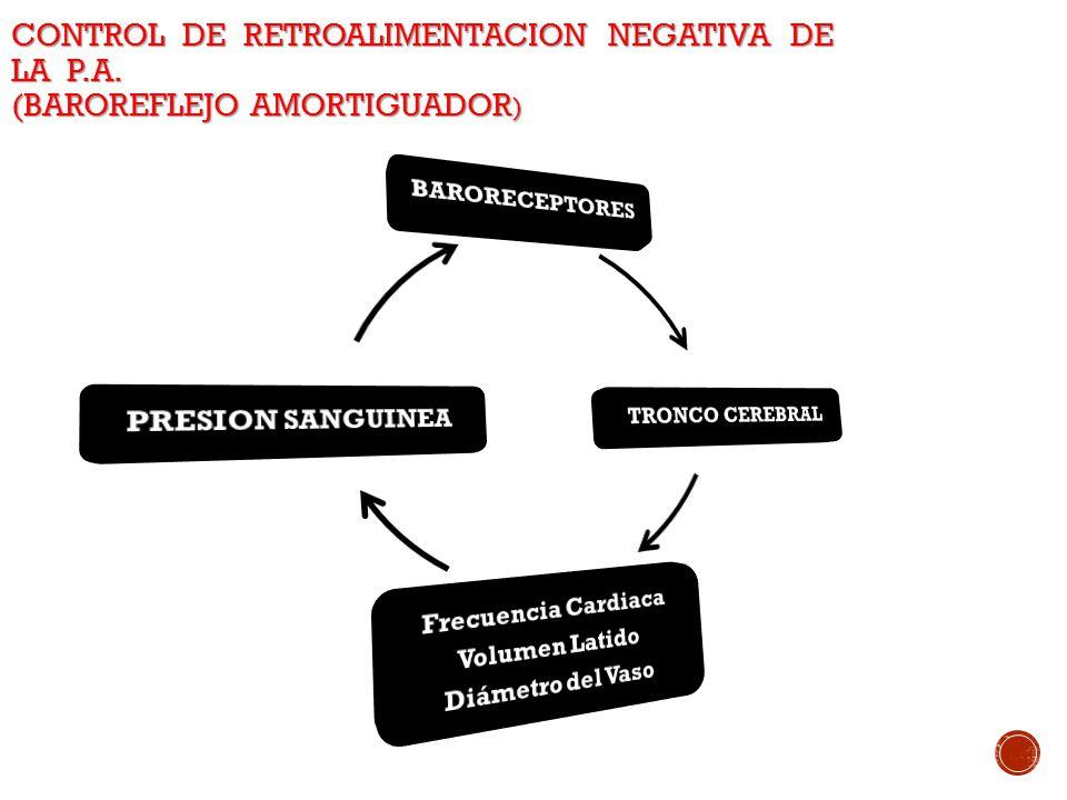 CONTROL DE RETROALIMENTACION NEGATIVA DE LA P.A. (BAROREFLEJO AMORTIGUADOR )