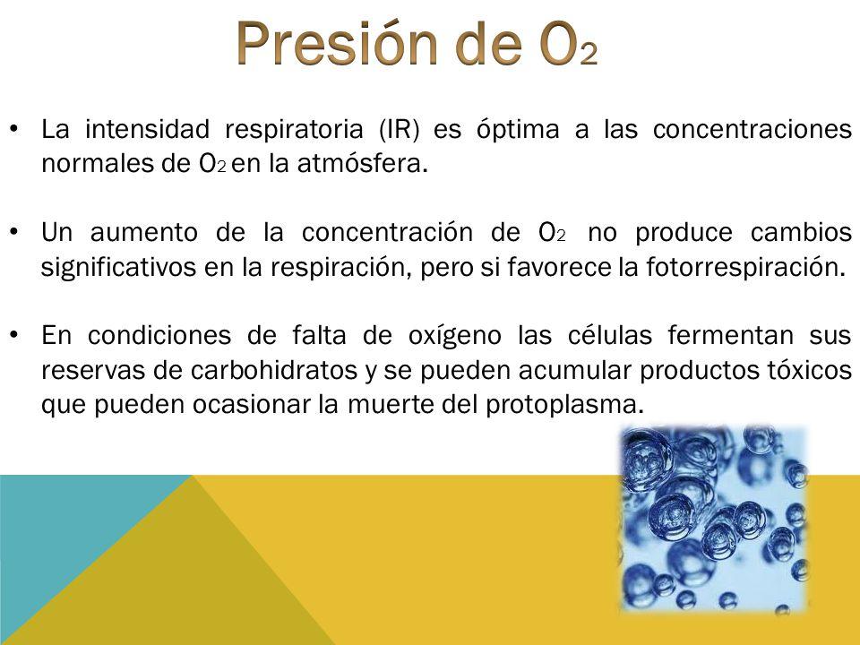 La intensidad respiratoria (IR) es óptima a las concentraciones normales de O 2 en la atmósfera. Un aumento de la concentración de O 2 no produce camb
