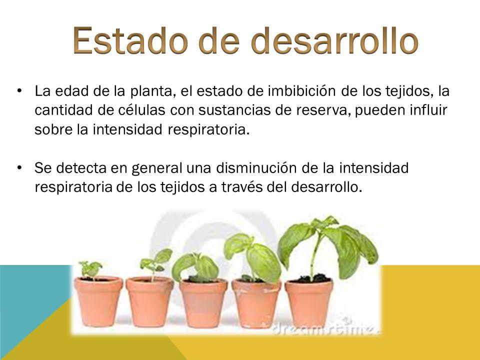 La edad de la planta, el estado de imbibición de los tejidos, la cantidad de células con sustancias de reserva, pueden influir sobre la intensidad res
