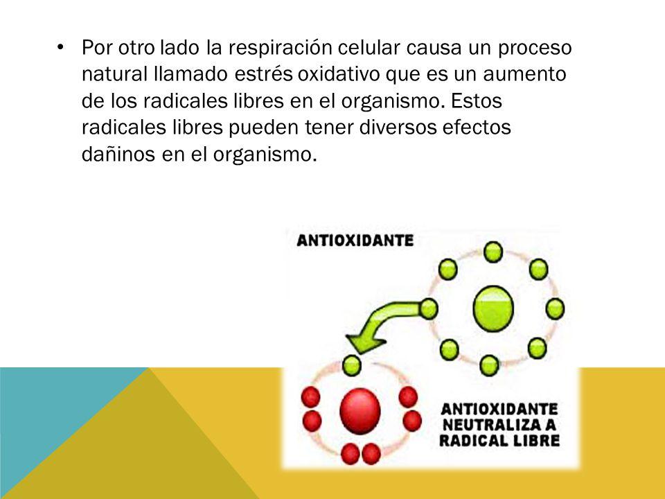 Por otro lado la respiración celular causa un proceso natural llamado estrés oxidativo que es un aumento de los radicales libres en el organismo. Esto
