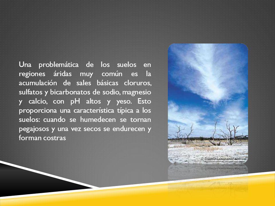 Una problemática de los suelos en regiones áridas muy común es la acumulación de sales básicas cloruros, sulfatos y bicarbonatos de sodio, magnesio y