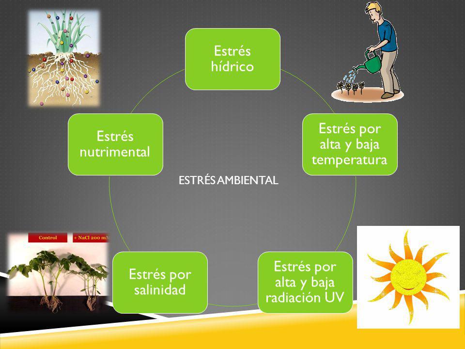 ESTRÉS AMBIENTAL Estrés hídrico Estrés por alta y baja temperatura Estrés por alta y baja radiación UV Estrés por salinidad Estrés nutrimental