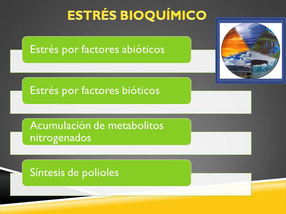 Estrés por factores abióticosEstrés por factores bióticos Acumulación de metabolitos nitrogenados Síntesis de polioles