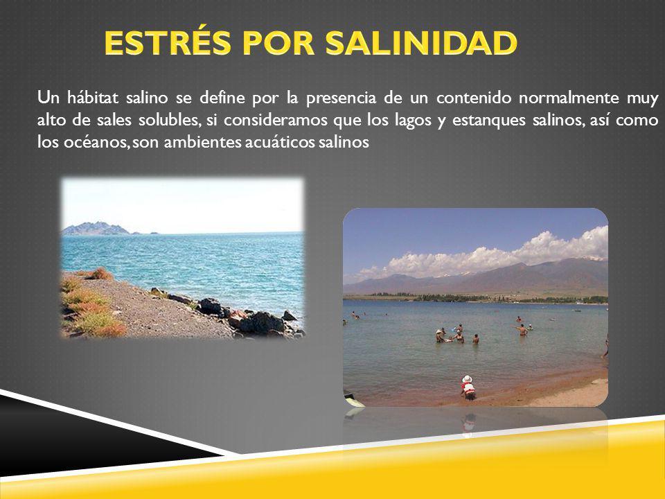 Un hábitat salino se define por la presencia de un contenido normalmente muy alto de sales solubles, si consideramos que los lagos y estanques salinos