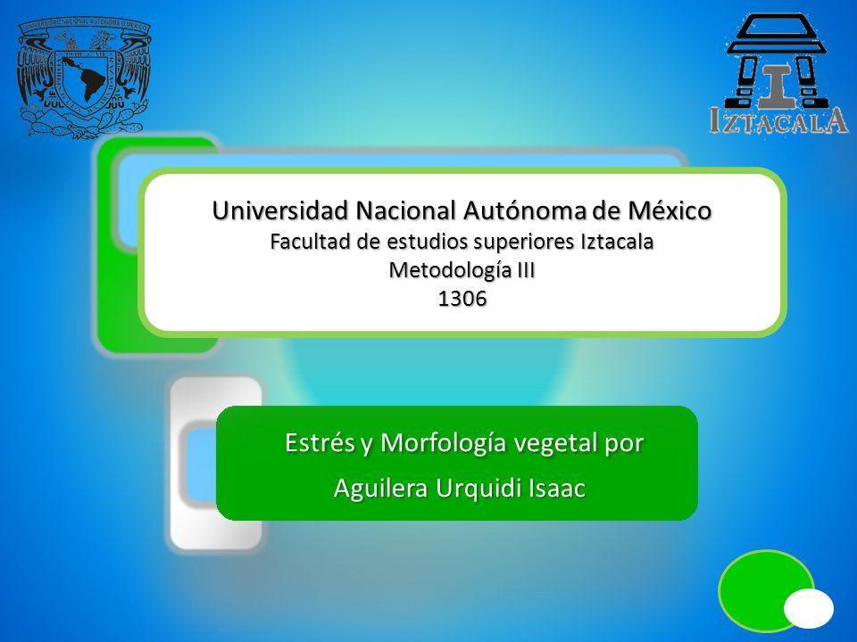 Estrés y Morfología vegetal por Estrés y Morfología vegetal por Aguilera Urquidi Isaac Aguilera Urquidi Isaac Universidad Nacional Autónoma de México