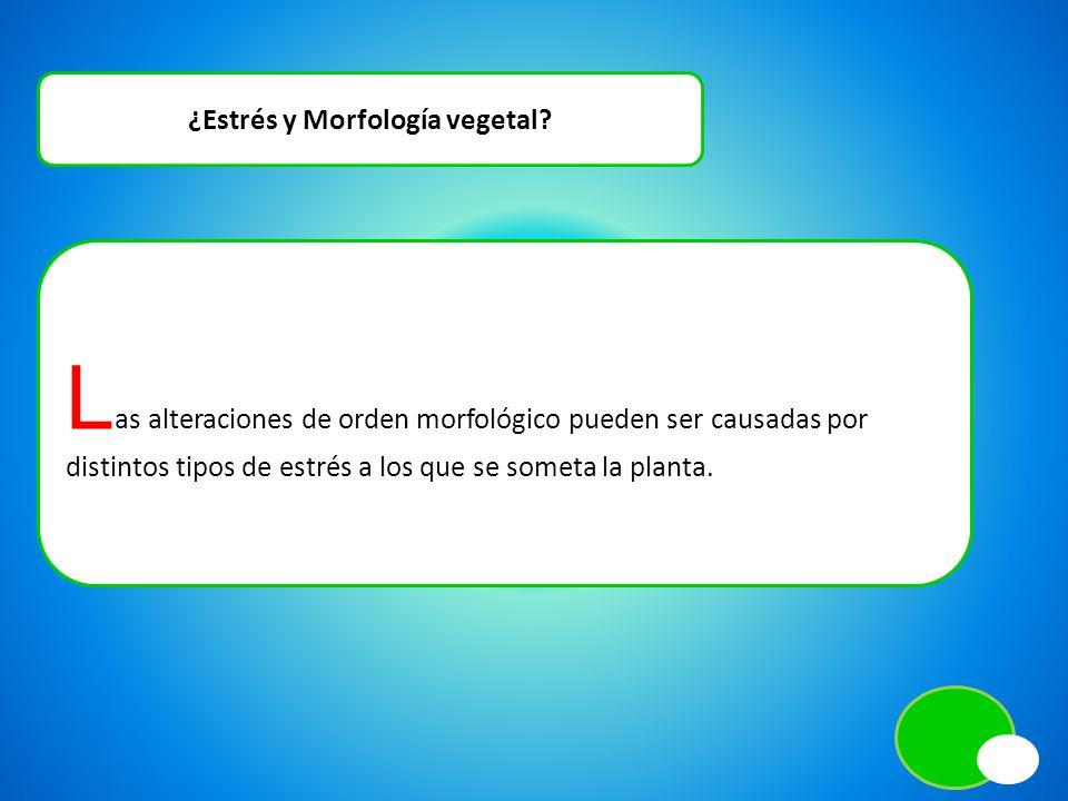 ¿Estrés y Morfología vegetal? L as alteraciones de orden morfológico pueden ser causadas por distintos tipos de estrés a los que se someta la planta.