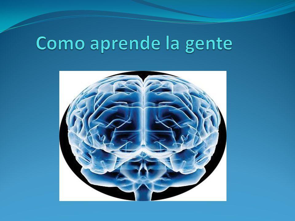Experiencia- vivencias Mente- cerebro Escuela- educación