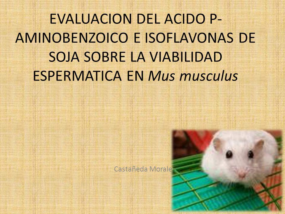 EVALUACION DEL ACIDO P- AMINOBENZOICO E ISOFLAVONAS DE SOJA SOBRE LA VIABILIDAD ESPERMATICA EN Mus musculus Castañeda Morales Jesús