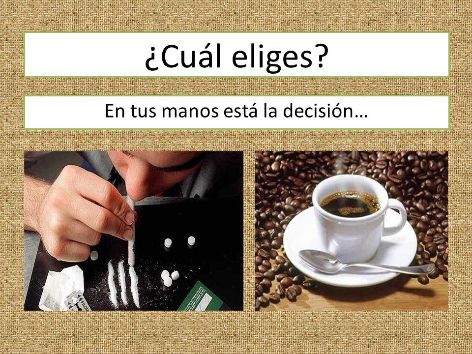 ¿Cuál eliges En tus manos está la decisión…