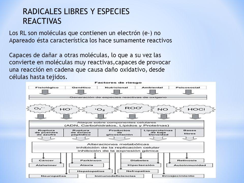 RADICALES LIBRES Y ESPECIES REACTIVAS Los RL son moléculas que contienen un electrón (e-) no Apareado ésta característica los hace sumamente reactivos