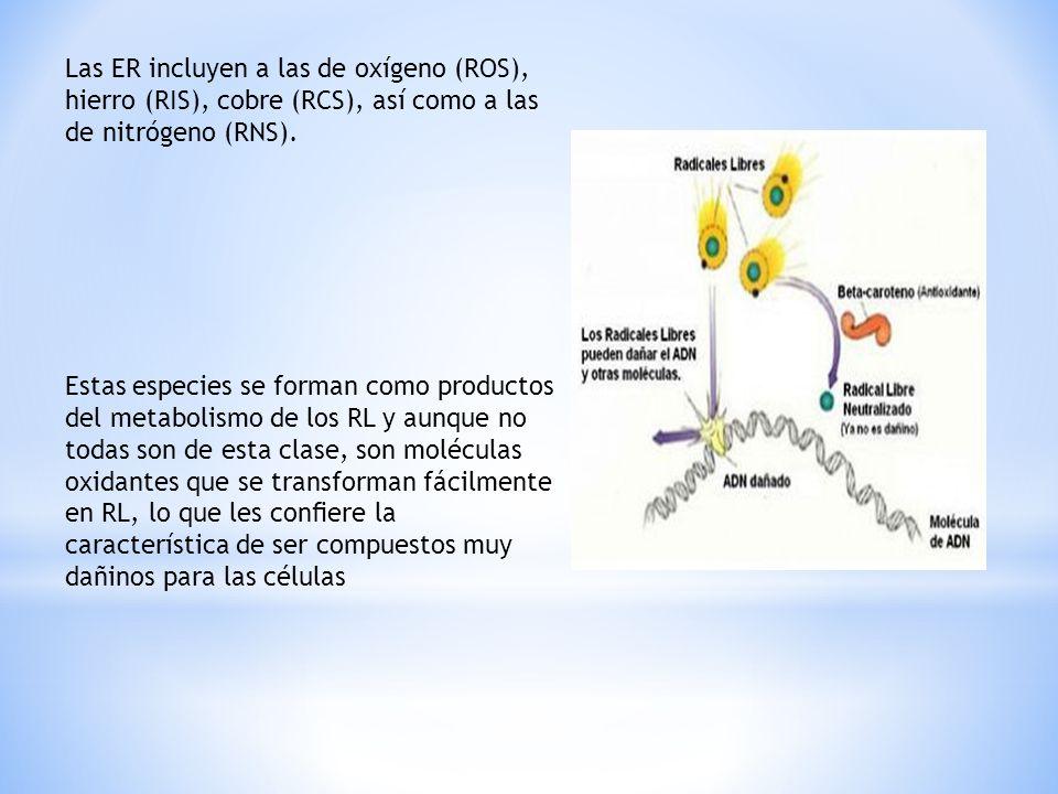 Las ER incluyen a las de oxígeno (ROS), hierro (RIS), cobre (RCS), así como a las de nitrógeno (RNS). Estas especies se forman como productos del meta