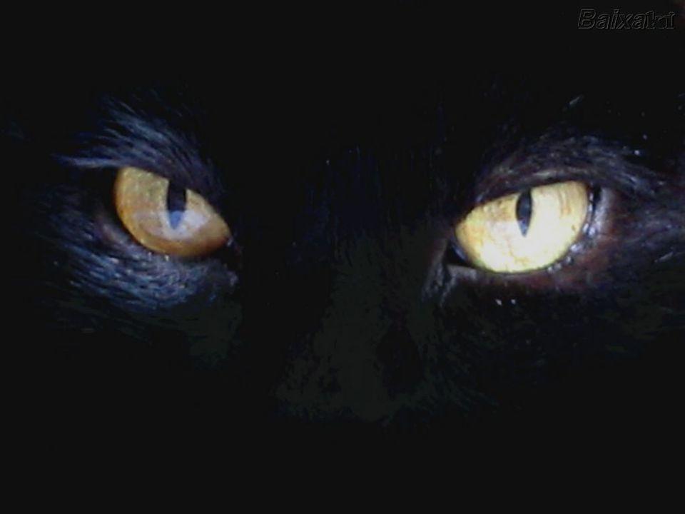 Si una persona viniera a nuestra casa y los gatos sintieran que esa persona está ahí para perjudicarnos o que es mala, los gatos nos rodearán para protegernos.