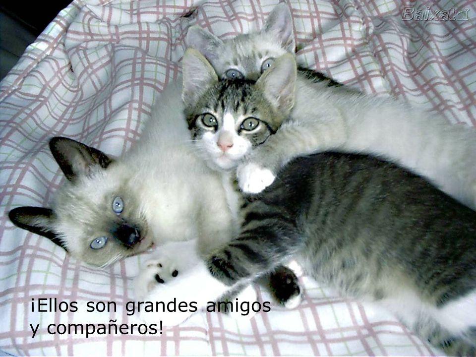Los gatos son criaturas adorables, y aman a sus dueños por encima de todo, pero tienen una manera diferente de amar... Igual de verdadera