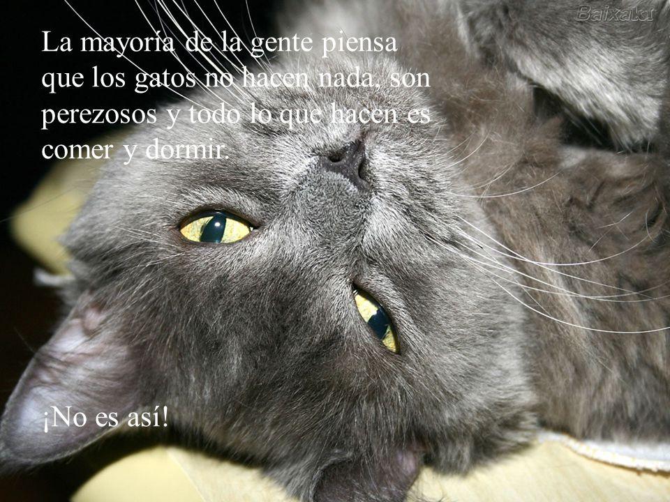 La mayoría de la gente piensa que los gatos no hacen nada, son perezosos y todo lo que hacen es comer y dormir.