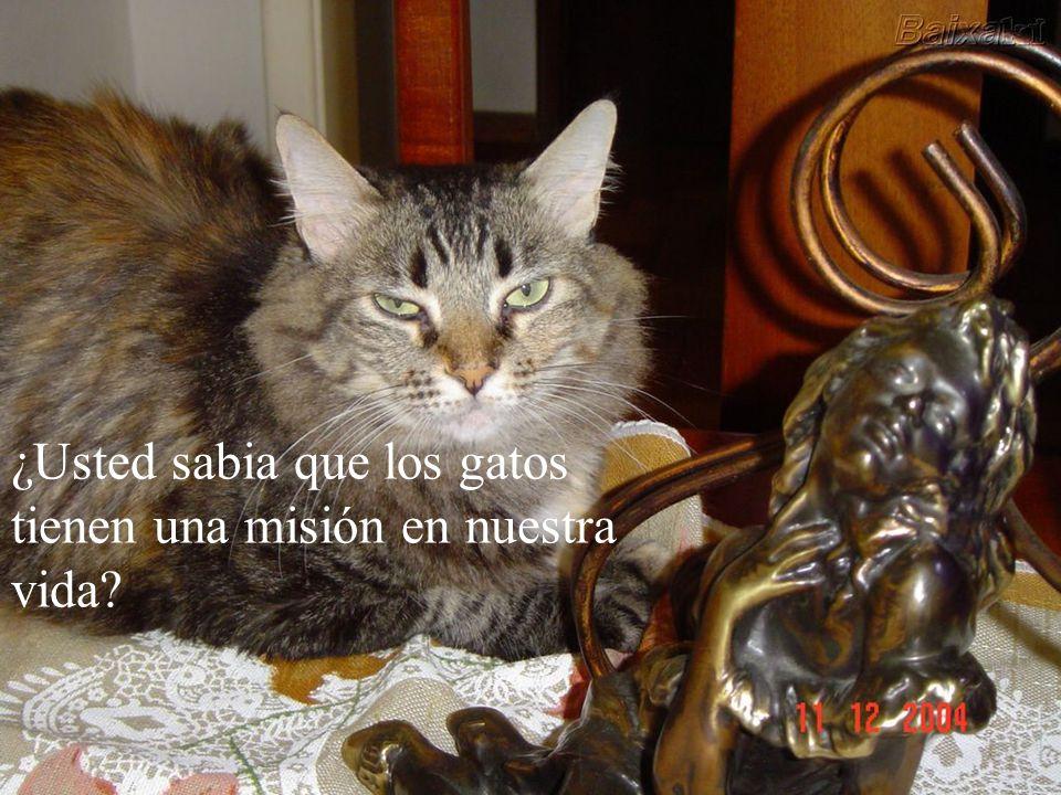 La mayoría de la gente piensa que los gatos no hacen nada, son perezosos y todo lo que hacen es comer y dormir. ¡No es así!