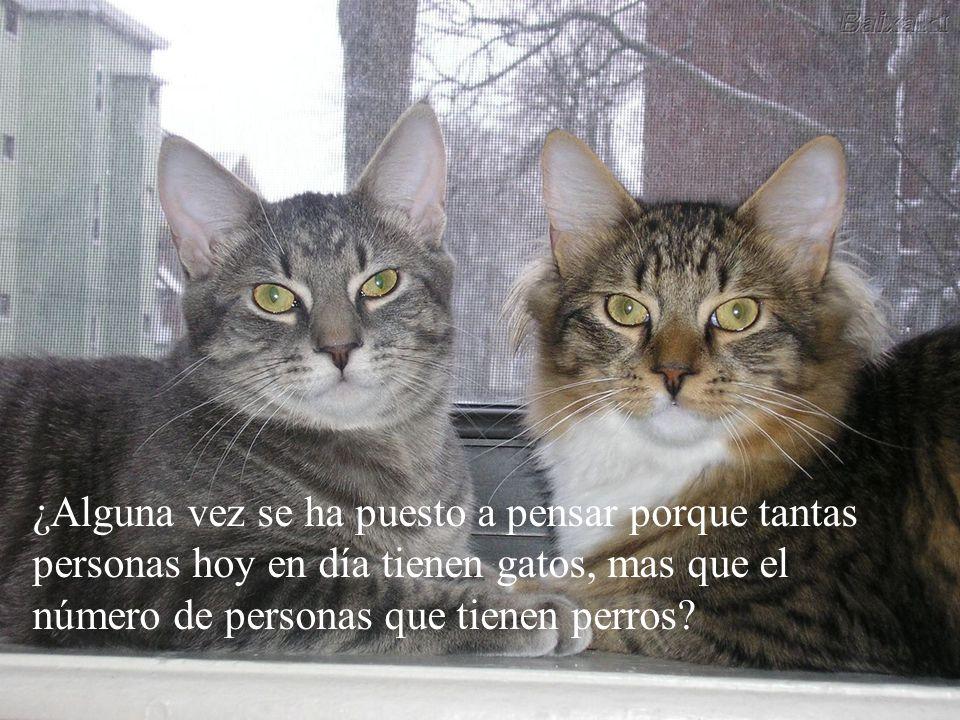 ¿Usted sabia que los gatos tienen una misión en nuestra vida?