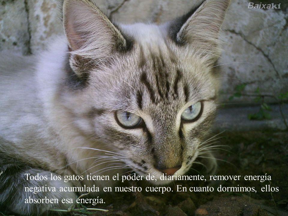 Aquí está una serie de datos sobre la vida secreta de los gatos.