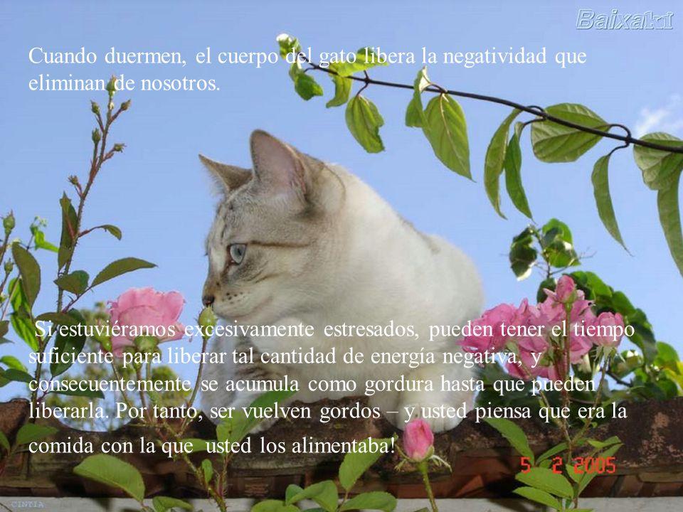 Cuando duermen, el cuerpo del gato libera la negatividad que eliminan de nosotros.