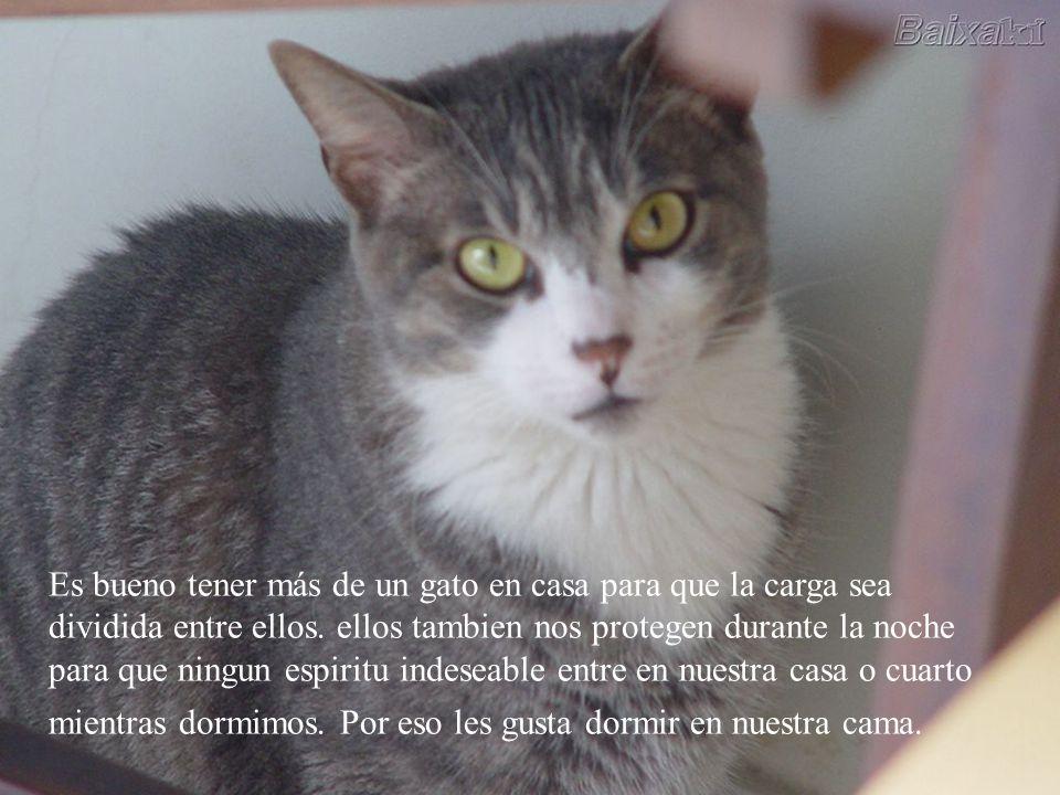 Las personas alérgicas a los gatos son emocionalmente incapaces de amar a alguien con profundidad, porque reprimen sus verdaderos sentimientos