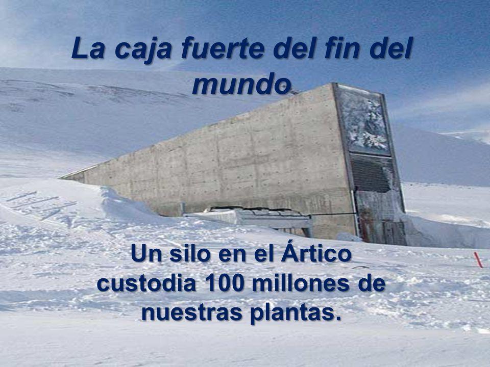 La caja fuerte del fin del mundo Un silo en el Ártico custodia 100 millones de nuestras plantas.