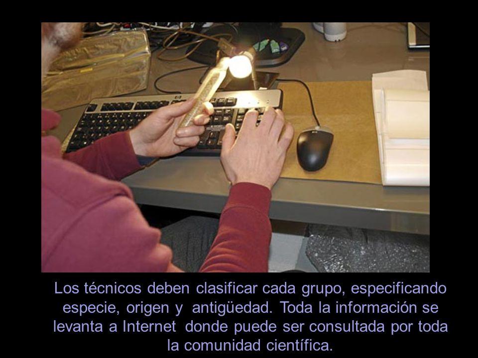 En la entrada del complejo se encuentra la sala de control donde los técnicos registran, en las computadoras del centro, todas las semillas del depósi