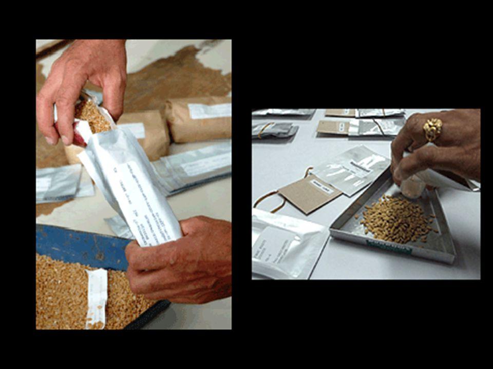 Actualmente existen ya más de 1.000 bancos de semillas. No obstante, muchos de estos, especialmente en los países en vias de desarrollo, se encuentran