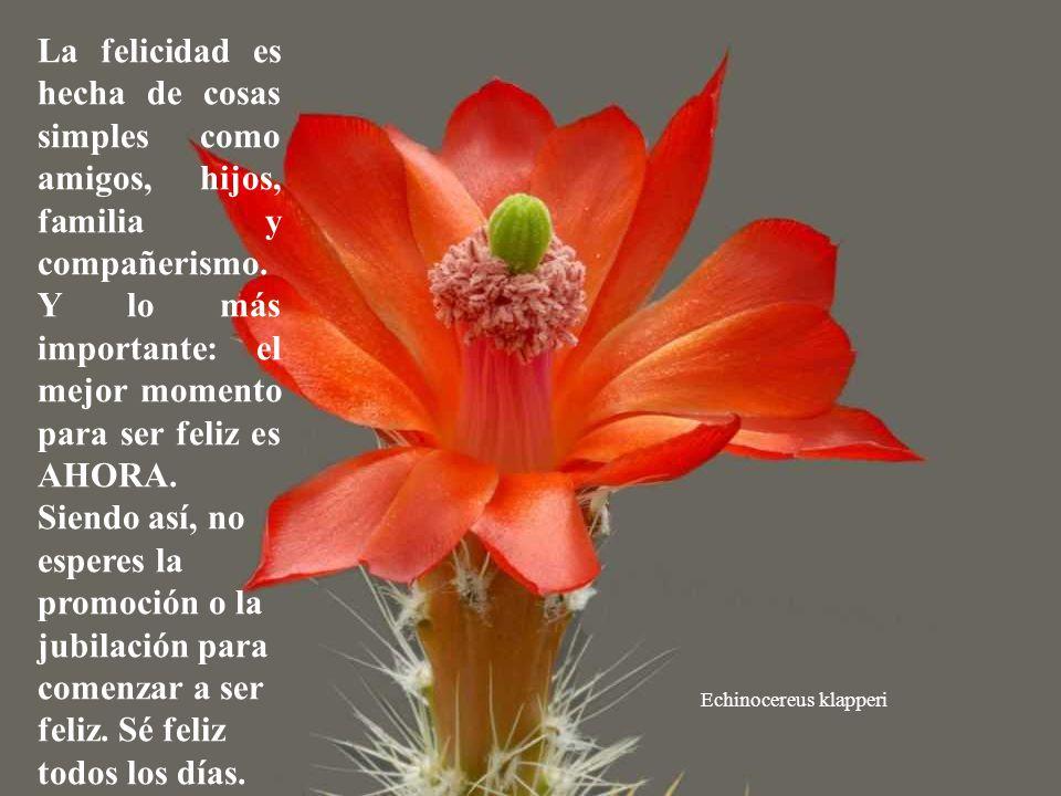 Discocactus pugionacanthus Y en ese momento, las personas percibían que las cosas más importantes de la vida son las más simples.(