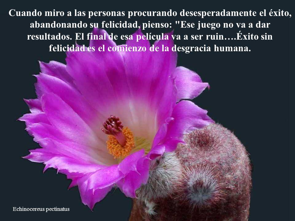 Echinocereus pectinatus Cuando miro a las personas procurando desesperadamente el éxito, abandonando su felicidad, pienso: Ese juego no va a dar resultados.