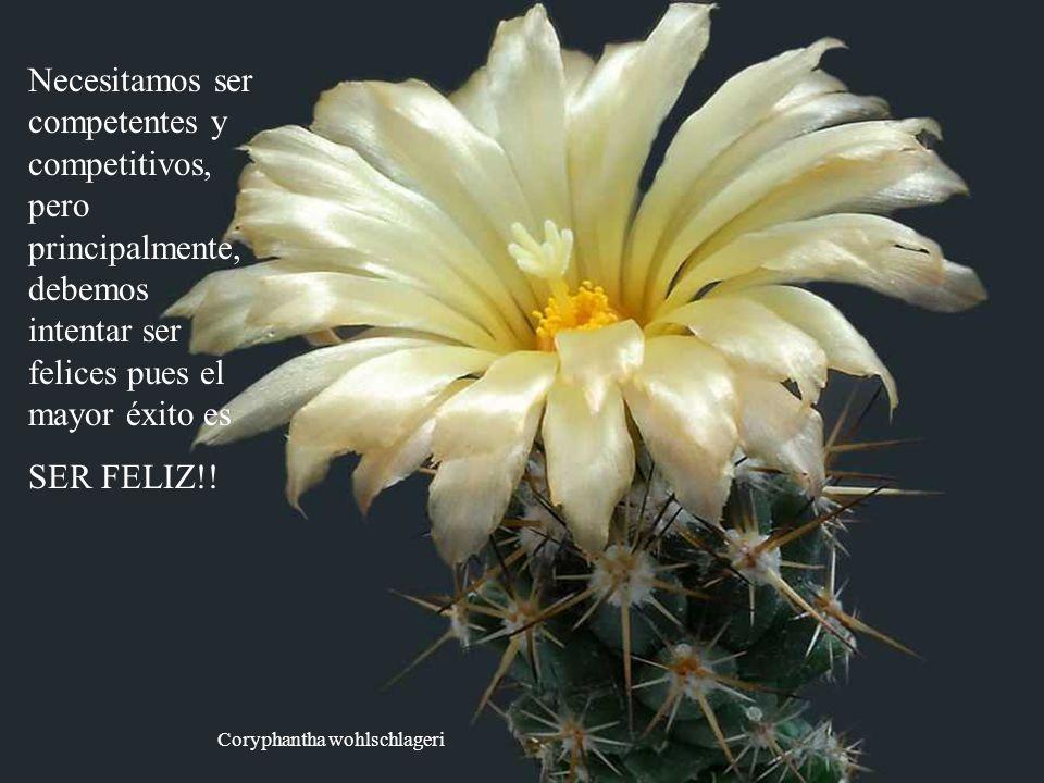 Echinocereus pectinatus Cuando miro a las personas procurando desesperadamente el éxito, abandonando su felicidad, pienso: