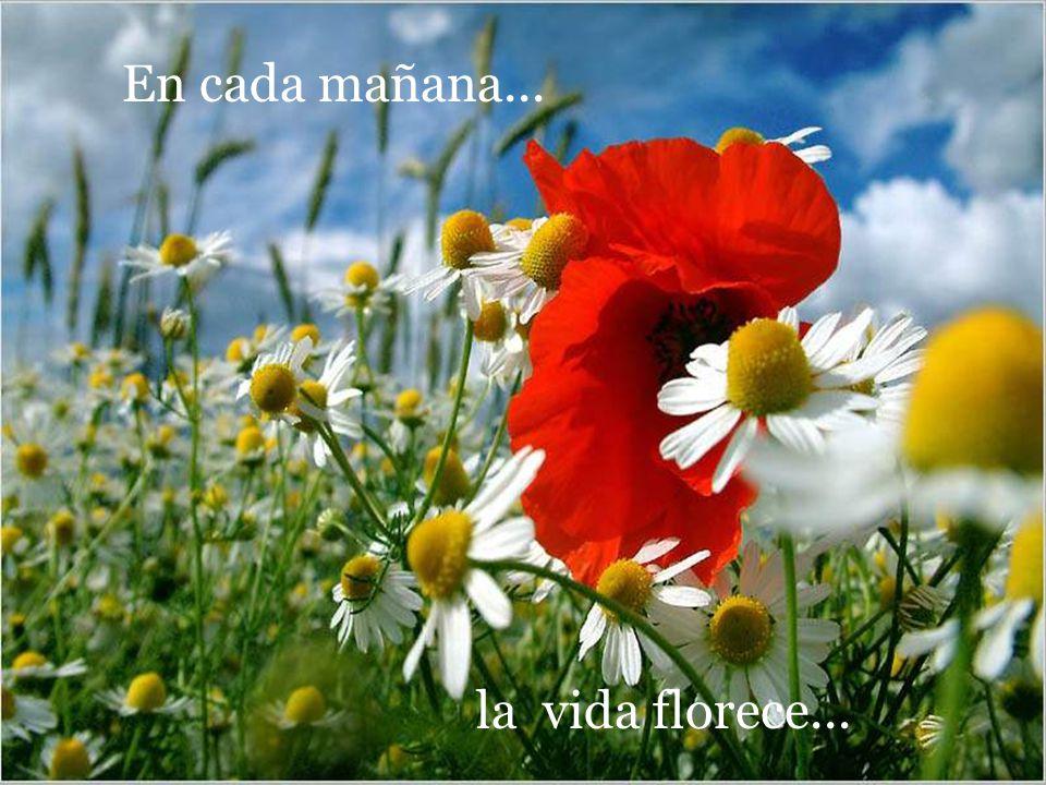 la vida florece... En cada mañana...