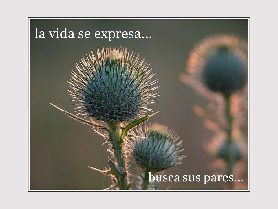 la vida se expresa... busca sus pares...