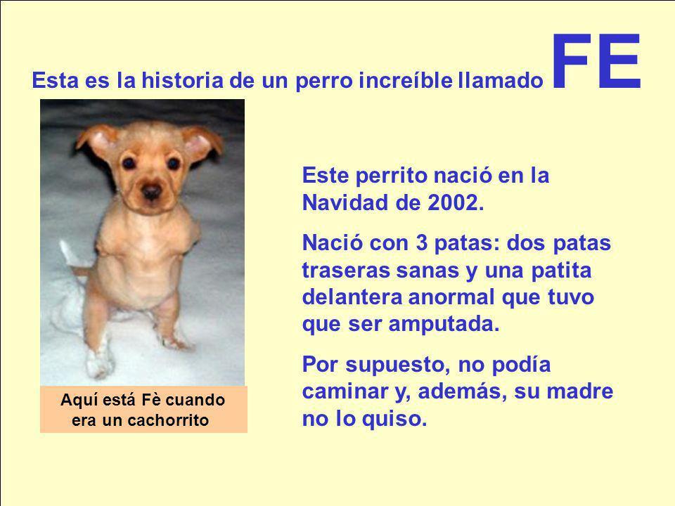 Esta es la historia de un perro increíble llamado FE Aquí está Fè cuando era un cachorrito Este perrito nació en la Navidad de 2002.
