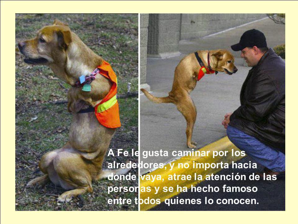 A Fe le gusta caminar por los alrededores, y no importa hacia donde vaya, atrae la atención de las personas y se ha hecho famoso entre todos quienes lo conocen.