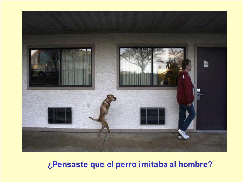 ¿Pensaste que el perro imitaba al hombre