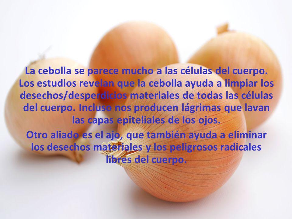 Las naranjas, toronjas y otras frutas cítricas se asemejan a las glándulas mamarias en las mujeres y ayudan a la salud y al flujo del movimiento linfático en los senos.
