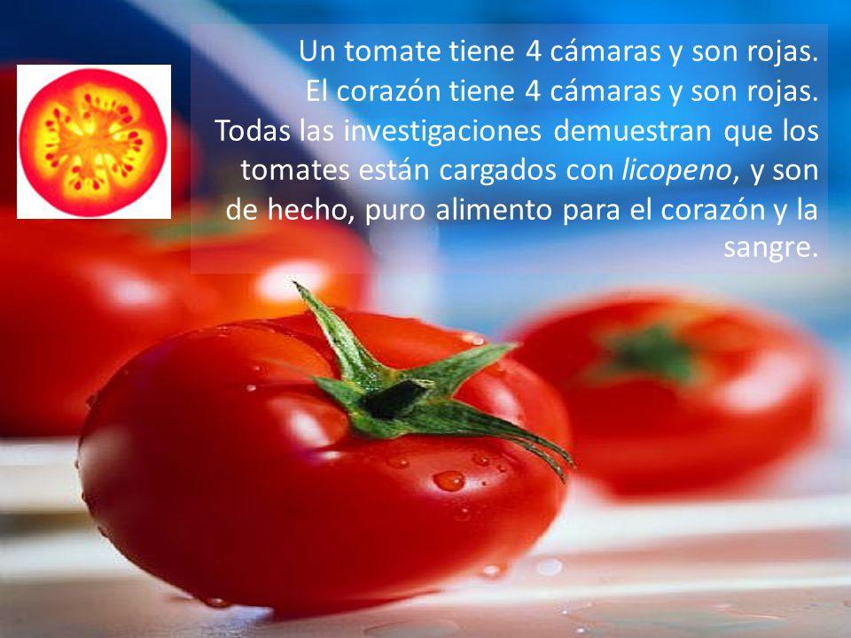 Un tomate tiene 4 cámaras y son rojas.El corazón tiene 4 cámaras y son rojas.