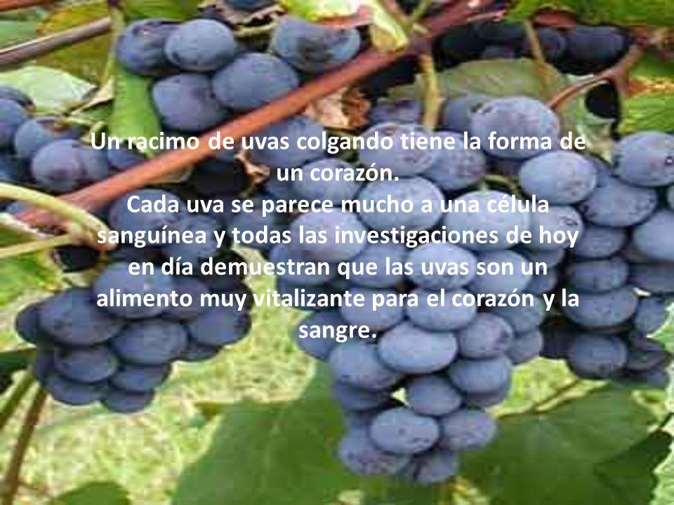 Un racimo de uvas colgando tiene la forma de un corazón.