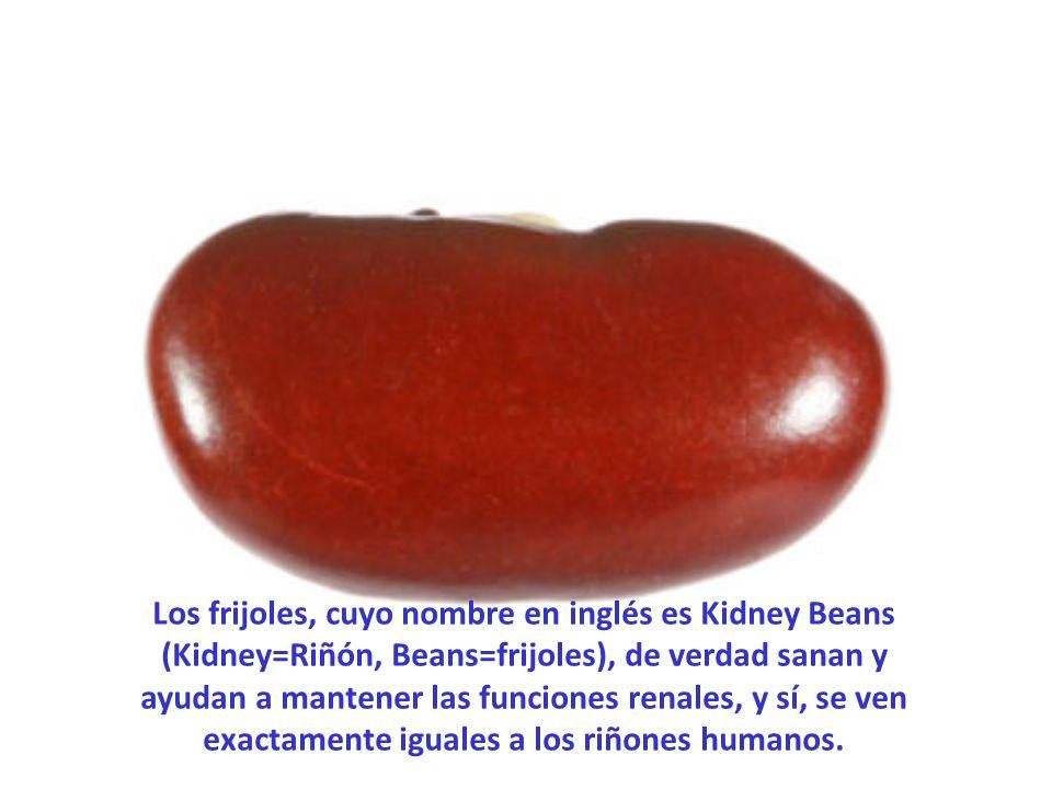 Los frijoles, cuyo nombre en inglés es Kidney Beans (Kidney=Riñón, Beans=frijoles), de verdad sanan y ayudan a mantener las funciones renales, y sí, se ven exactamente iguales a los riñones humanos.