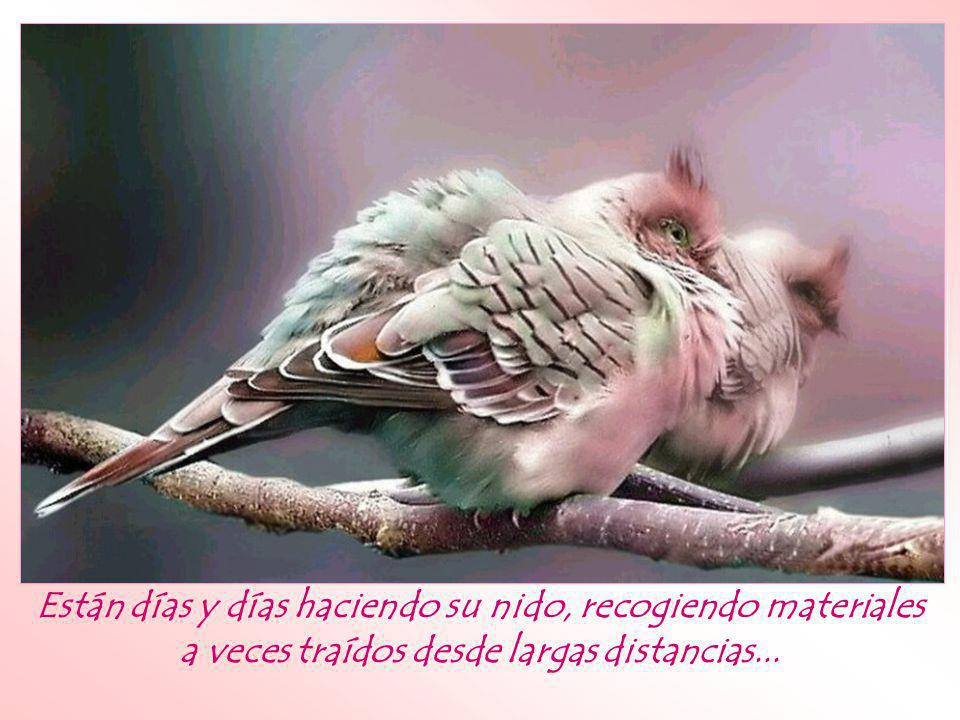 ¿Te has puesto a observar la actitud de los pájaros ante las adversidades