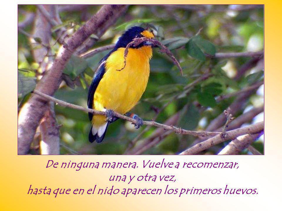 ¿Qué hace el pájaro? ¿Se ahuyenta, se paraliza, abandona la tarea?