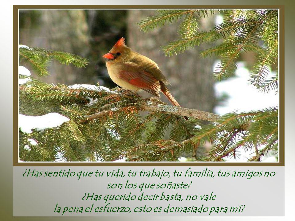 Duele recomenzar desde cero... Pero aun así el pájaro jamás enmudece ni retrocede, sigue cantando y construyendo, construyendo y cantando...
