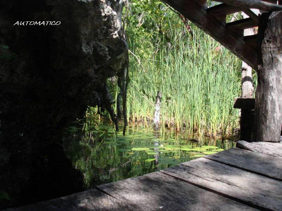 Caracter í sticas El color del agua usualmente es turquesa aunque en algunos es de un tono verdoso.