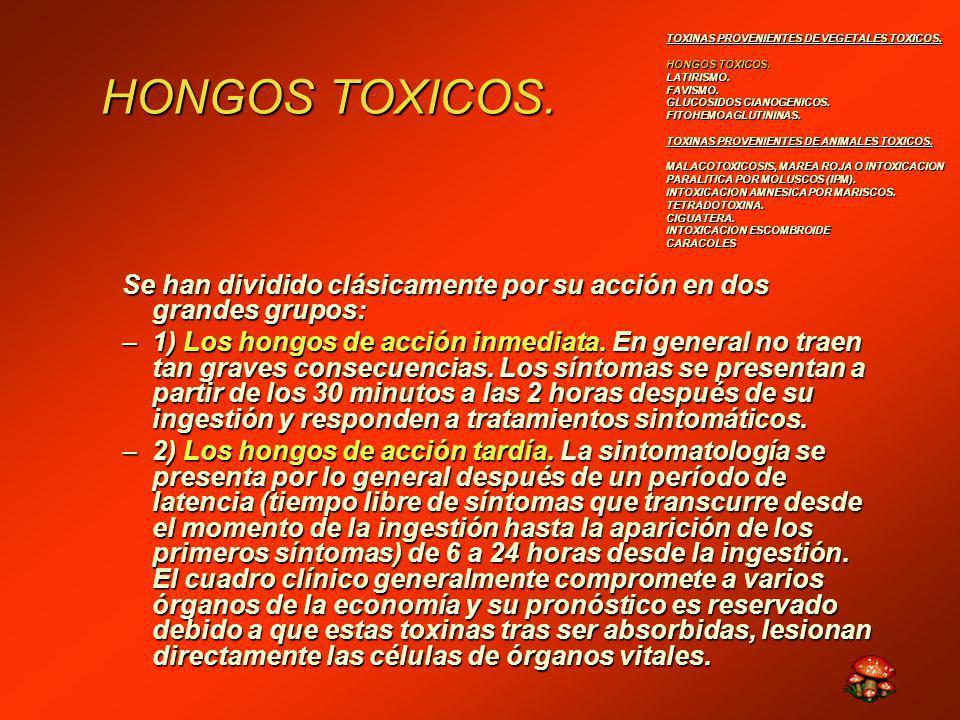 HONGOS TOXICOS.
