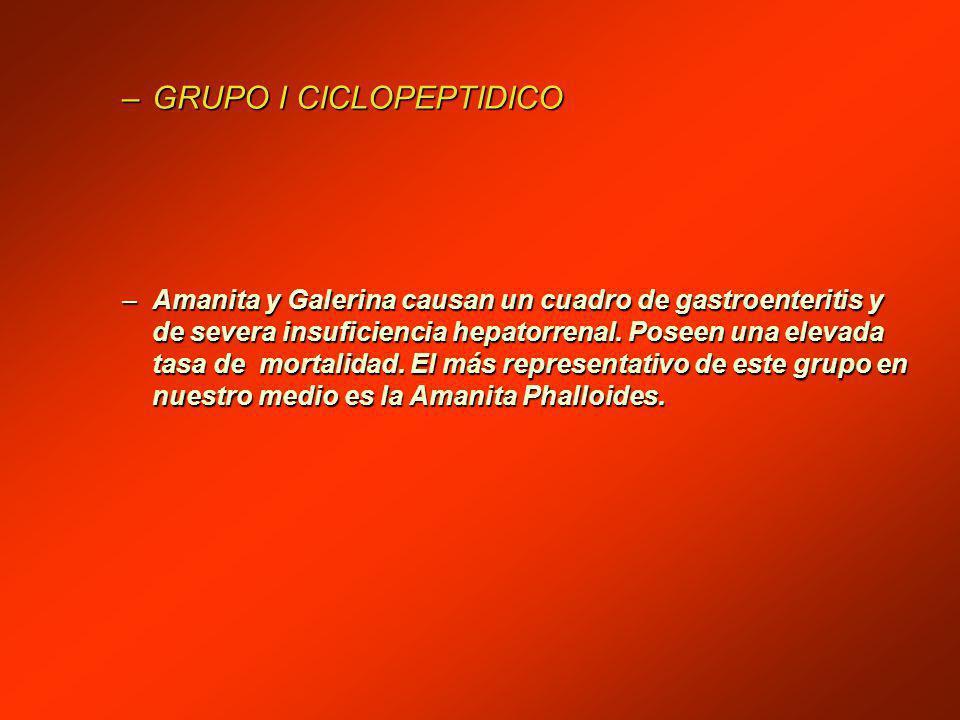 –GRUPO I CICLOPEPTIDICO –Amanita y Galerina causan un cuadro de gastroenteritis y de severa insuficiencia hepatorrenal.