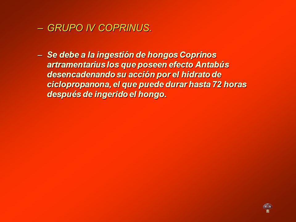 –GRUPO IV COPRINUS.