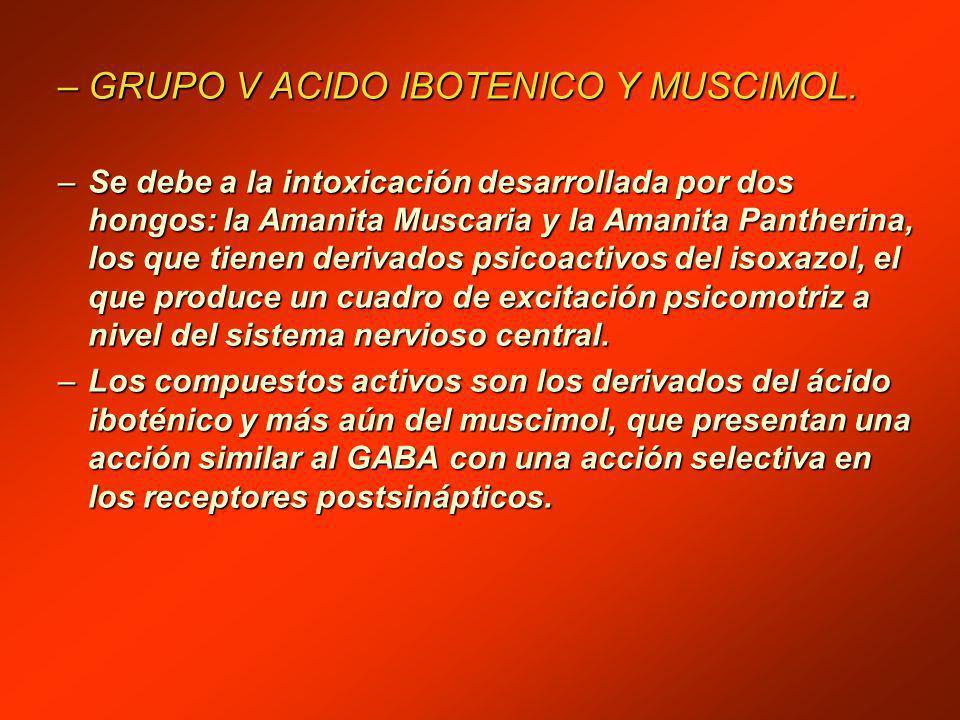 –GRUPO V ACIDO IBOTENICO Y MUSCIMOL.